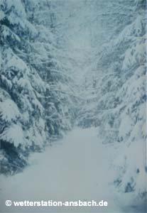 Winter im März 1988 im Schönfeldwald bei Schalkhausen