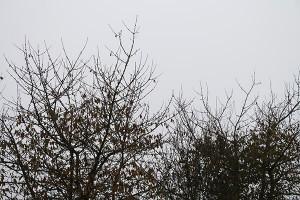Entnervend: viele grauen Wolken bzw. Hochnebel trübten den November 2013 ein. Foto: Hans-Martin Goede