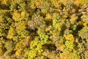 """Goldenes Oktoberwetter 2017 - die Farbenpracht der Laubbäume """"von oben""""! Foto: Goede"""