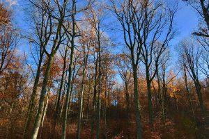 Bereits am 22. und 23. November war es in Mittelfranken wiederholt sonnig und mild mit Temperaturen bis 12 Grad. Foto: Goede