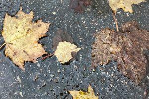 Immer wieder Regen - wenig Sonne - der November sorgte für trübe Stimmung. Foto: Goede