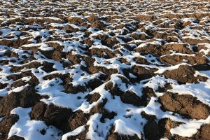"""""""auf der Sonnenseite des Lebens"""" sorgte die Februarsonne bald für Lücken in der Schneedecke. Foto: Goede"""