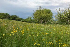 satt blühende Wiesen mitten im Mai wie sonst nur im Juni - dazu leider immer wieder drohende Unwetterwolken am Himmel. Foto: Hans-Martin Goede