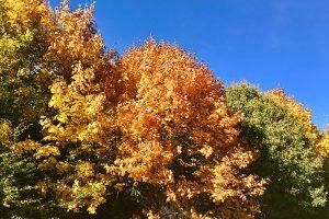"""Goldenes Oktobersommerwetter"" am 12.10.2018. Foto: hmg"