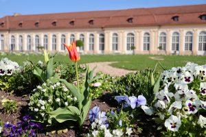 """Ostern 2019 im Hofgarten - die Blumenpracht konnte sich Dank Hoch """"Katharina"""" in den schönsten Farben entfalten. Foto: Goede"""