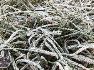 Reif am 5. Dezember 2019 - dem einzigen Tag mit Dauerfrost im Dezember in Ansbach. Foto: Hans-Martin Goede