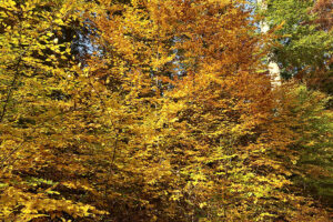 """Goldener Oktober"" Impressionen 25.10.2020, Foto: Hans-Martin Goede"