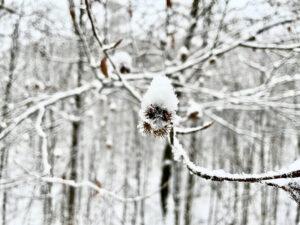 Soviel Schnee wie im Januar 2021 gab es in Ansbach seit 11 Jahren (2010) nicht mehr. Foto: GOEDE